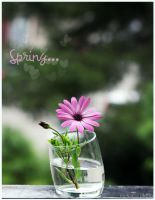 Spring... by Mokarta-Photo
