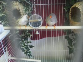 My finches by Nightfable