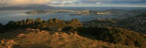 Wellington by Opticnurv