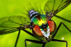 Insects 56 by josgoh