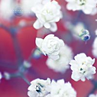 Blue et rouge by illusionality