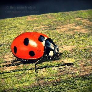Coccinelle by NoCompletion