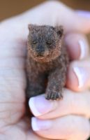 2.5 inch Grizzly Cub by kimbearlys