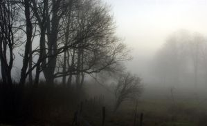 Fog Series - Photo 3 by Fire-Fuel