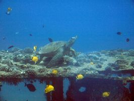 Underwater sea Turtle by GemSterling