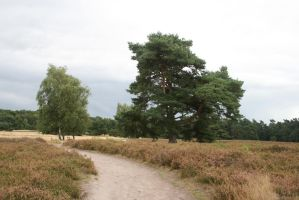 heath landscape with a pine and birch tree by Nexu4