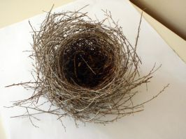 Nest 2 by GoblinStock