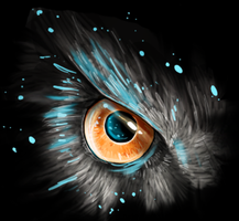 Owl eye by Sander-Morket