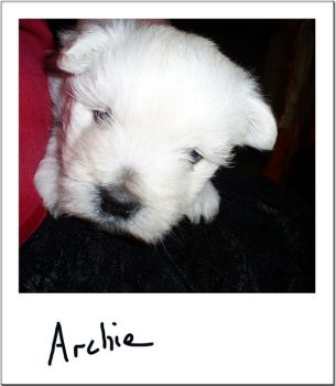 Archie - The Inquisitive Puppy by rebelfemme