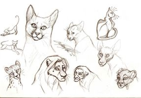 kitty sketches diff types by moonfeather