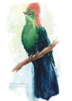 Fischer's Turaco by Carcaneloce