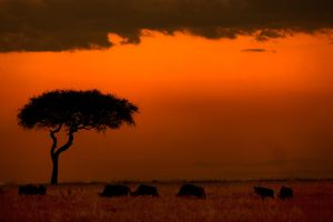 My Africa 56 by catman-suha