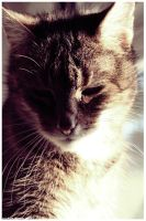 Cat 28 by halogenlampe