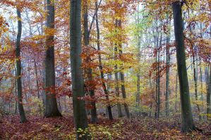 28 beeches by tanja1983