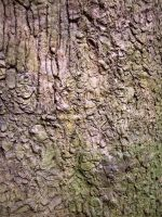 Tree Bark by SarahPancakes75