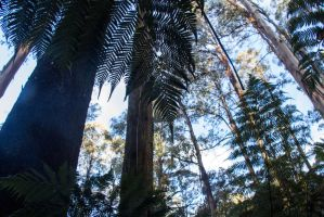 Forest canopy by tessavance