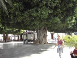 great tree by maryllis-stock