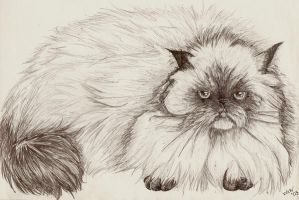 Persian Kitty by Wolfcry17