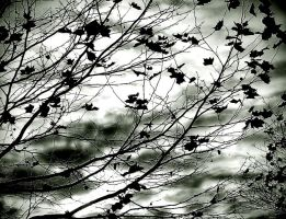 Leaves Texture 01 by Aimi-Stock