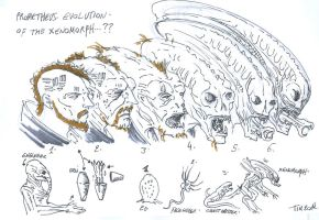 prometheus fanart  xenomorph evolution by t-rex79