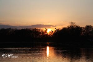 Silhouette birds flying over himley sunset by DemiLeighFreeman