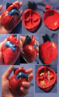 Anatomical Heart treasure box by sneakyfetusprod