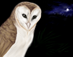 Barn Owl by Forbidding