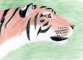 Tiger head by SouloftheSky