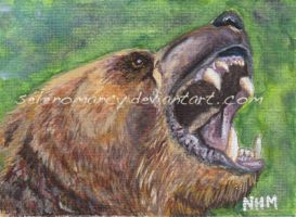 Grizzly ACEO by Illuminaiae