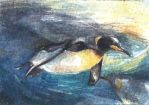 ATC/ACEO Watercolour Penguins by Chromamelon
