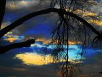 The Branch by SharPhotography