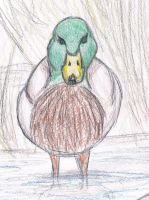 Duck by puddlecat1