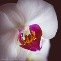 Orchid by DrAndrei