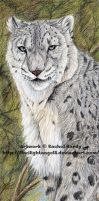 Snow Leopard Bookmark by 8TwilightAngel8