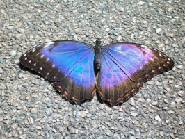 Common Morphos by Tanyuuu