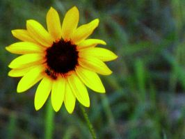 Sunflower and Bee by my-dog-corky
