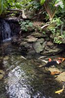 Koi Pond of the Jungle by spaceraptor