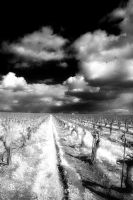 Cloudy Vines by WeirdFresno