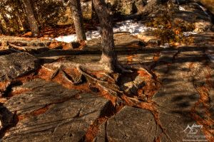 HDR Spring Rocks Trees by Nebey