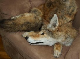 Fox Red Coyote for sale by Phoenix-Cry
