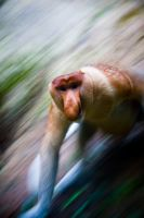 Speedy Monkey by alvse