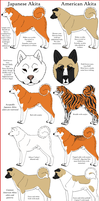 Akita Breeds Comparison by Leonca