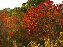 Mississippi Fall Color 2 by texasghost