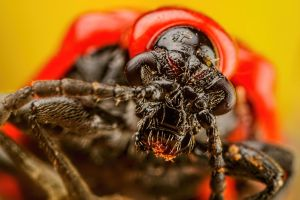 Scarlet Lilly Beetle Series 1-3 by dalantech