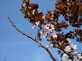 Day of April by bettina-coman