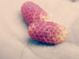 Berries by kaceymears