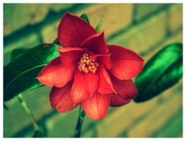 Flower Fade by NobbyWAGD