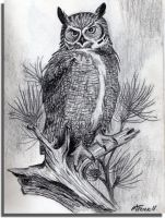 Owl sketch by mkuppe