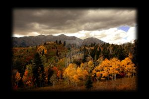 Aspen Colors Nebo Loop Utah by houstonryan