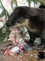 Eating otter with nummy fish by Allerlei
